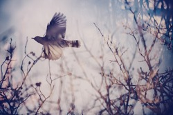 Double exposure image of forest elements and a flying bird. Film like abstract picture of Spring concept.