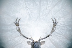 Double exposure of a deer and forest