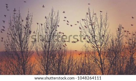 double exposure of a flock of...