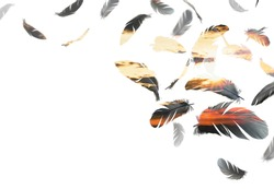double exposure of black feathers bird floating on a white background with sunset sky. feather abstract in freedom concept with copy space.