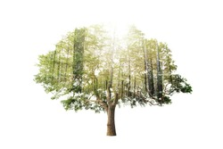 Double exposure of single tree with forest over sky background