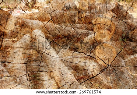 double exposure of timber logs...
