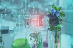 Double exposure pipette dropping above test tube on sample chemical into herbal plants , bio technology medicine research concept.