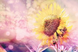 double exposure,sunflower with rainbow  bokeh blur and  solf focus vintage image.