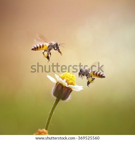 Double Honey Bee