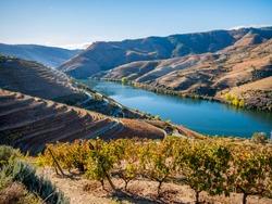 Douro river and wine