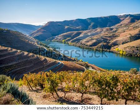 Douro river and wine #753449215