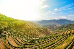 Douro Valley in Porto wine region: Vineyards near Duero river and Pinhao, Portugal Europe