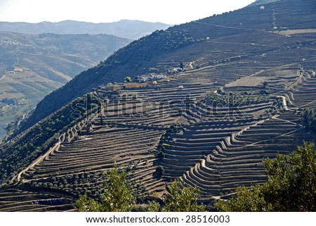 Douro Valley - main Vineyard region in Portugal.  Portugal's port wine vineyards. Point of interest in Portugal.
