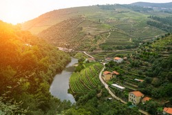 Douro Valley, Portugal. Top view of river, and the vineyards are on a hills.