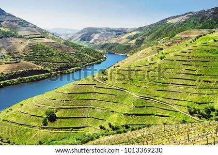 Douro Valley. Vineyards and landscape near Pinhao town, Portugal