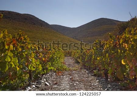 Douro Vineyard, Portugal, Europe