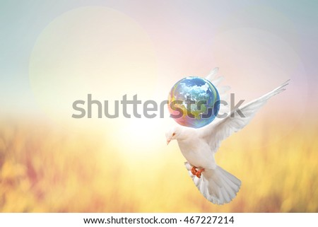 Dove Bird holding the world ball on Abstract pastel forest blurred background.Elements of this image furnished by NASA. and international day of peace 2017.World Water Day