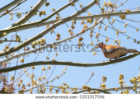 Dove bird Sitting on the Tree Branch in its Natural Habitat  #1351317596