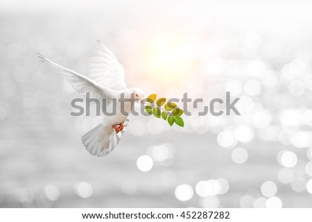 Dove carrying leaf branch and international day of peace 2017.World Water Day  #452287282