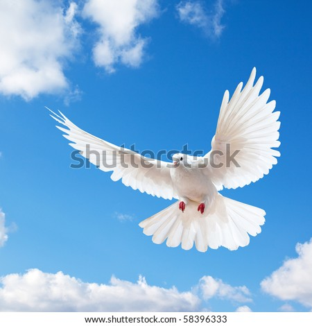 Dove in the air with wings wide open in-front of the blue sky #58396333