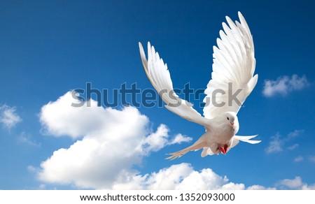 dove in the blue sky #1352093000
