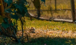 Dove in the garden, bird in freedom