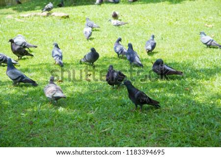 Dove on grass, Dove in the garden, Dove in the lawn. #1183394695