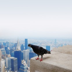 Dove on the roof of the sky scraper in front of misty sky with smog. Copy-space. New Yorc CIty from above view. Animals in urban area.