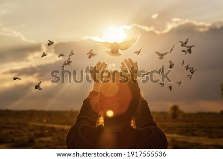Doves fly into the woman hands against the background of a sunny sunset during prayer.