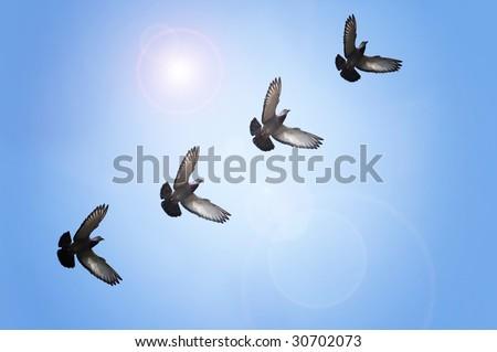 Doves flying in blue sky