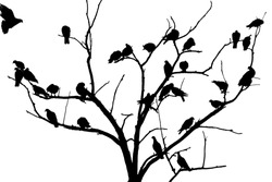 Doves on the tree,black and white photo,bird silhouette