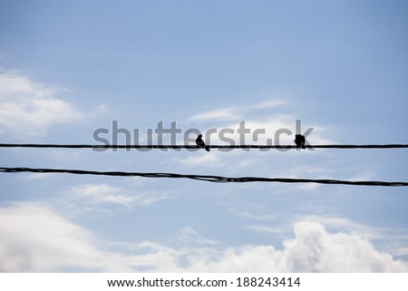 Doves silhouettes on the wires with beautiful sky in the background