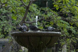 Doves taking a bath in the fountain in a city park, water mist and droplets flying around. Selective focus, blurred background.