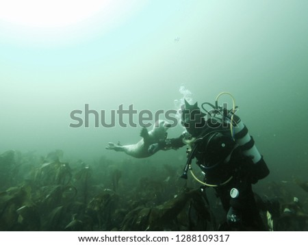 Down at 20 meters depth the seals show up, leaving this amazing picture still stuck in my retina.