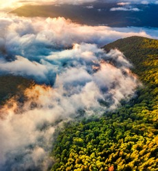 Down view from flying drone of mountain forest with fog spreads on valley. Spectacular morning scene of Carpathian mountains, Ukraine, Europe. Traveling concept background.