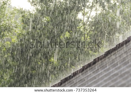Photo of  downpour scenery with roof and vegetation