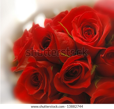 dozen red roses, resting on table top