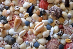 Dozens of different sea shells (scallop, cowrie, Mercenaria and others) with synthetic pearls on the handmade panel