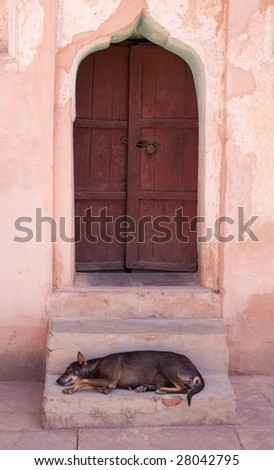 Dozing Indian street dog sheltering from noon day  sun on the steps of a doorway