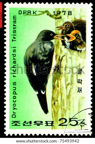 DPRK - CIRCA 1978: a stamp printed in DPRK,  shows   Woodpecker  feeding  two young., series, circa 1978