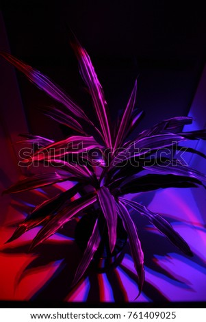 Stock Photo Dracaena plant in low light from high angle view