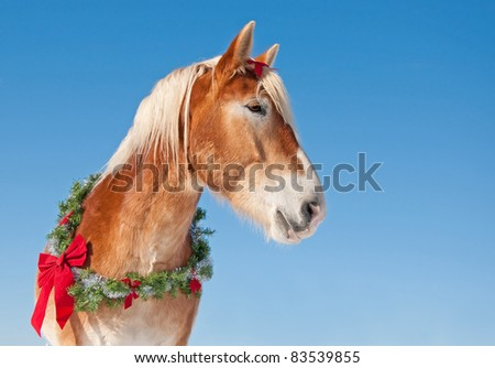 Draft horse wearing a Christmas wreath against clear blue winter sky - stock photo