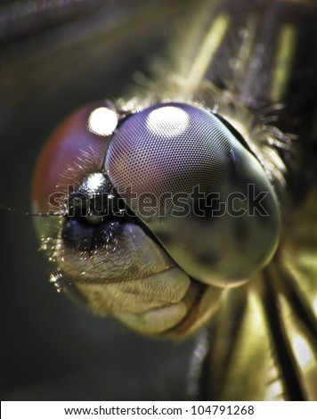 Dragon fly face close-up