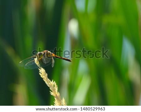 Dragon fly perfectly balanced in the sun