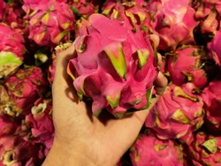 Dragon fruit is a fruit that contains a variety of colors, white, purple and dark red.  dragon fruit also has a fairly high anti-oxide content