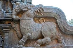 Dragon sculpture carved in the wall of the Brihadeeshwarar temple, Thanjavur, Tamil nadu. Stone carvings of animals carved in the walls of ancient temple. Indian rock art of stone relief carvings.