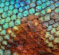 Dragon skin pattern texture background.
