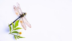 Dragonflies and flowers on white background.