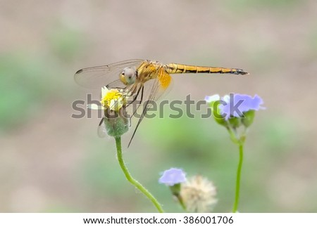 Dragonflies catch the flowers are blooming.