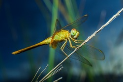Dragonflies, insects, animals, nature, macro Dragonfly - focus on the eye.