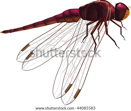 cute dragonfly clipart. Dragonfly clip art