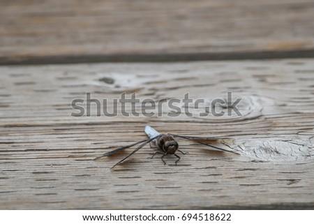 Dragonfly #694518622