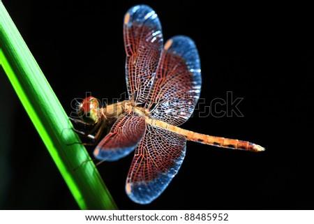 Dragonfly #88485952