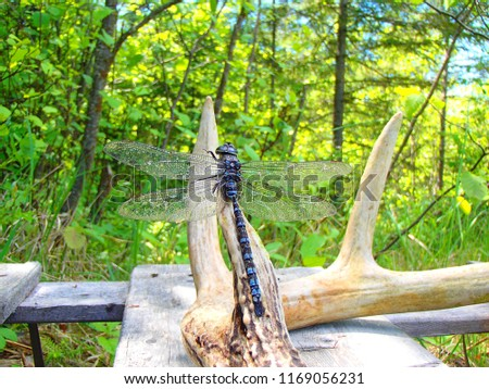 dragonfly and deer antler #1169056231